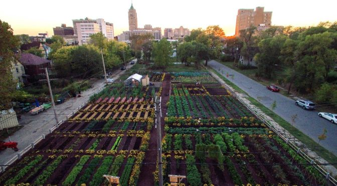 New sustainable agriculture development in Detroit feeds 2,000 households for free